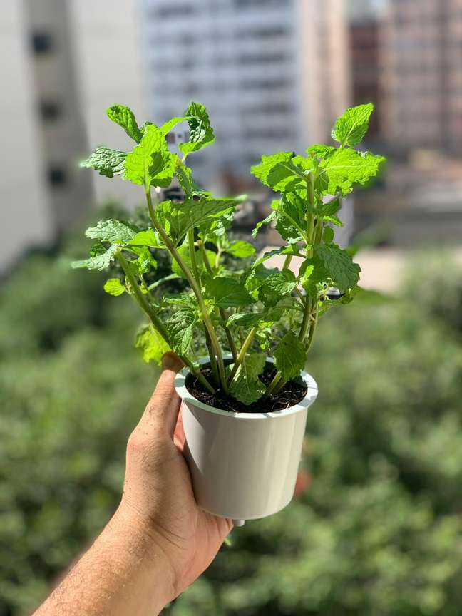 A Brota comercializa 12 tipos de cápsulas diferentes, que variam nas categorias de hortaliças, temperos e ervas para chá
