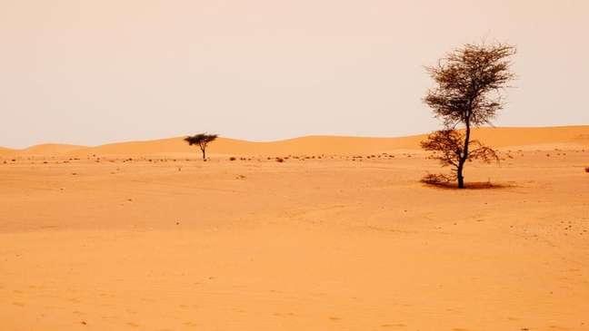 Ao sul do Deserto do Saara, o Sahel é altamente vulnerável à desertificação