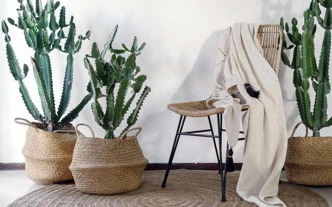 Cactos na decoração: ideias para inserir a planta nos ambientes internos