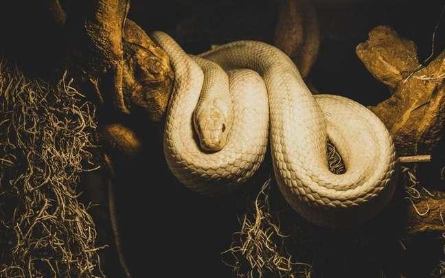 Veja como a cobra é vista por diferentes culturas e religiões -