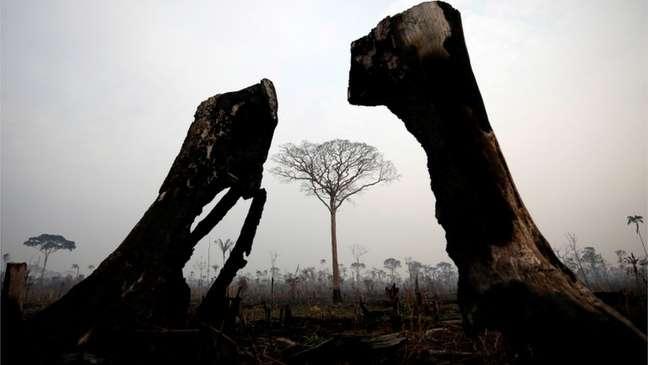 Floresta após incêndio em Boca do Acre, Amazonas, em foto de 2019
