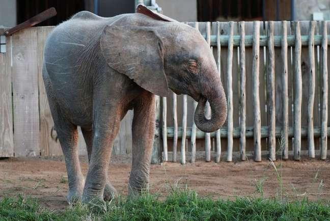 Khanyisa, a elefanta albina da África do Sul 23/05/2021 REUTERS/ Sumaya Hisham