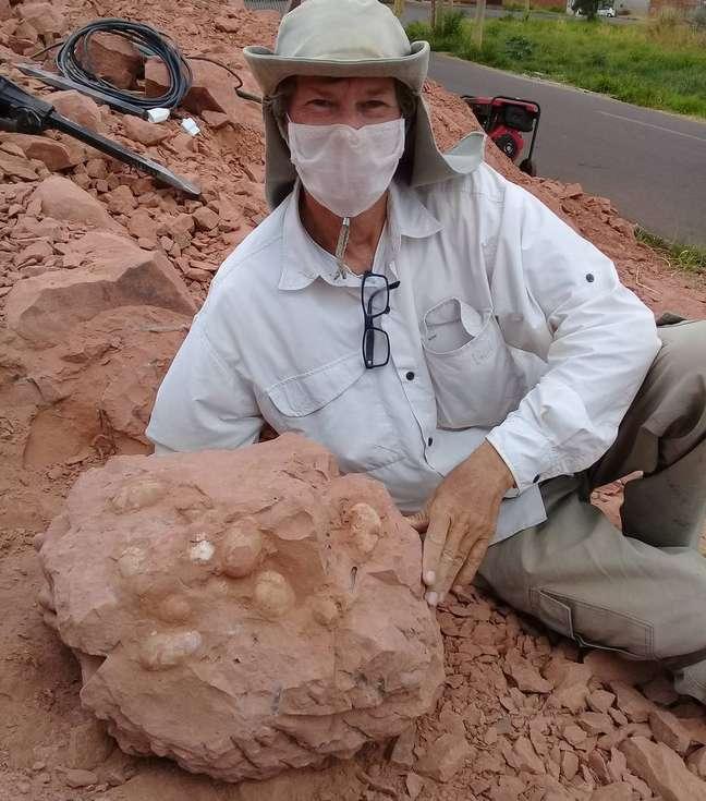O paleontólogo Willian Nava exibe a ninhada de ovos fossilizados que encontrou no sítio paleontológico de Presidente Prudente. Análises devem apontar se são ovos de crocodilos pré-históricos e, um deles, de um dinossauro carnívoro