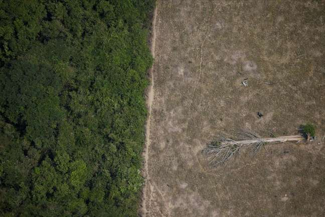 Área desmatada da Amazônia perto de Porto Velho, em Rondônia REUTERS/Ueslei Marcelino