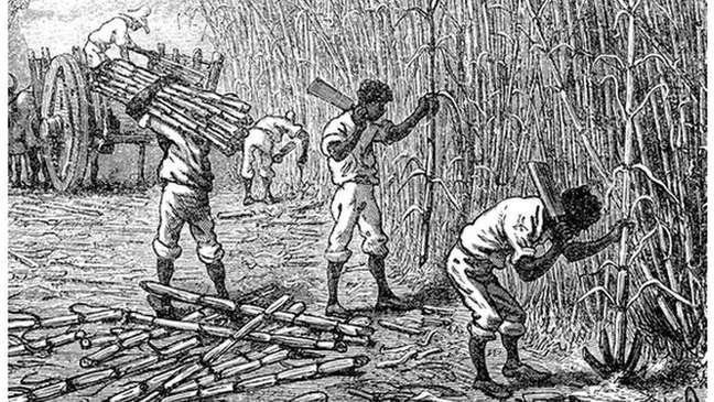 As plantações de cana de açúcar faziam da Jamaica uma das colônias britânicas mais lucrativas