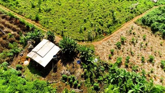 Plantação do Café Agroflorestal Apuí, na Amazônia.