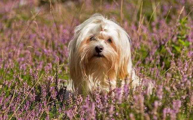 Saiba como é a personalidade do cão que nasceu com o Sol no signo de Câncer -