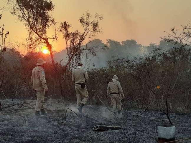 Bombeiros mobilizam contingente e aviões no combate aos incêndios no Pantanal, em Mato Grosso do Sul. Depois do controle das chamas, os bombeiros fazem o rescaldo e buscam animais atingidos pelo fogo