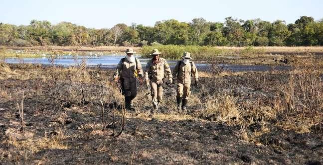 Bombeiros mobilizam contingente e aviões no combate aos incêndios no Pantanal, em Mato Grosso do Sul