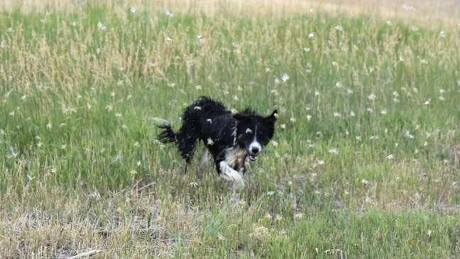 Entre os Estados mais afetados estão Montana, Wyoming e Oregon, onde o departamento estadual de Agricultura vem recebendo relatos de populações enormes de gafanhotos em diversas áreas