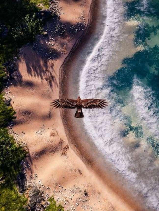Fotos de videogame, como este registro de Megan Reims de uma águia sobrevoando uma praia em 'Assassin's Creed Odyssey', oferecem uma visão utópica