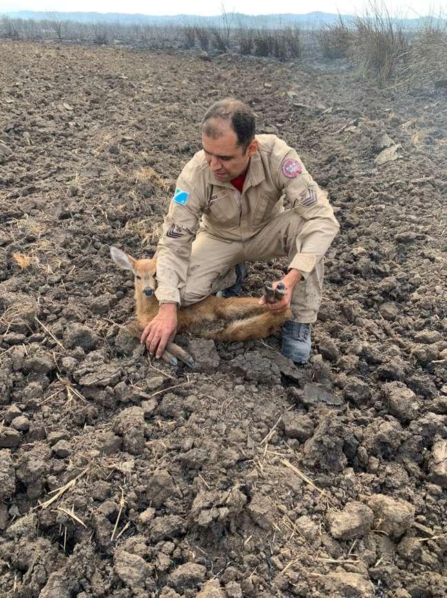 Após bombeiros constatarem que não havia lesões graves, filhote de cervo foi liberado em seu habitat
