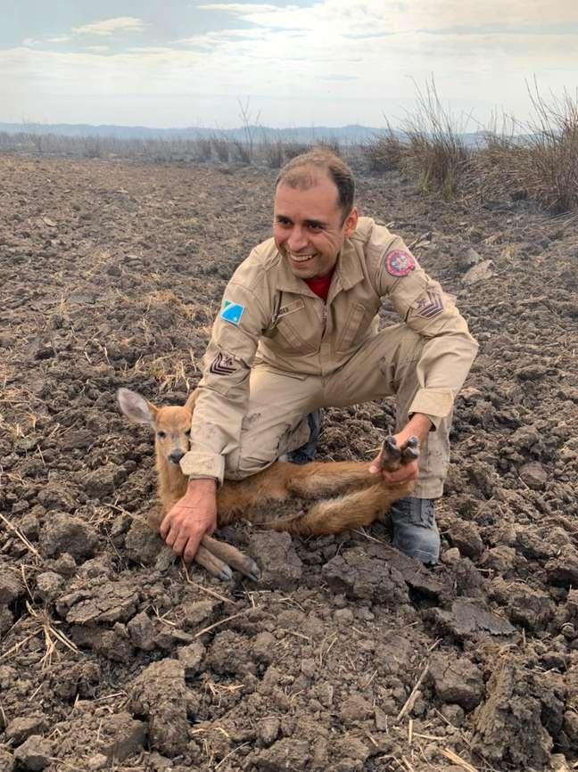 Filhote de cervo foi resgatado em meio a área atingida pelos incêndios em Bonito