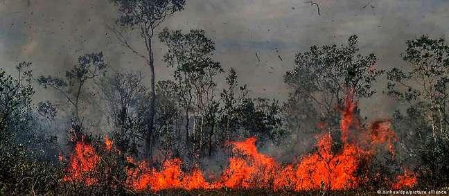 Onde a floresta já foi mais de 30% devastada, a emissão de carbono chega a ser dez vezes maior do que onde desmatamento é inferior a 20%