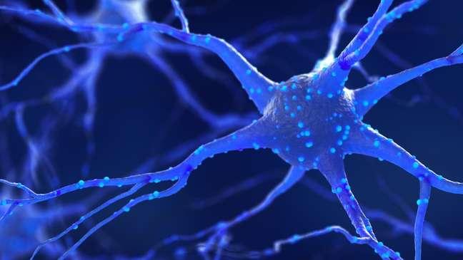 É verdade que nossos neurônios não se renovam? Ou que desperdiçamos muitos deles?