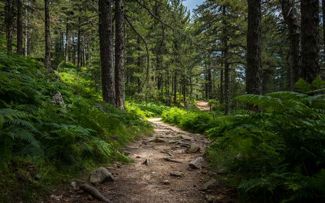 Trilhas exigem cuidados essenciais para fazer caminhada