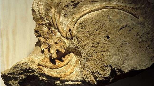 Alguns ossos de neandertais revelam as consequências de sérios danos físicos