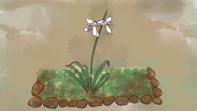Após encontrar ossada, morador colocou planta no jardim e ela logo floriu