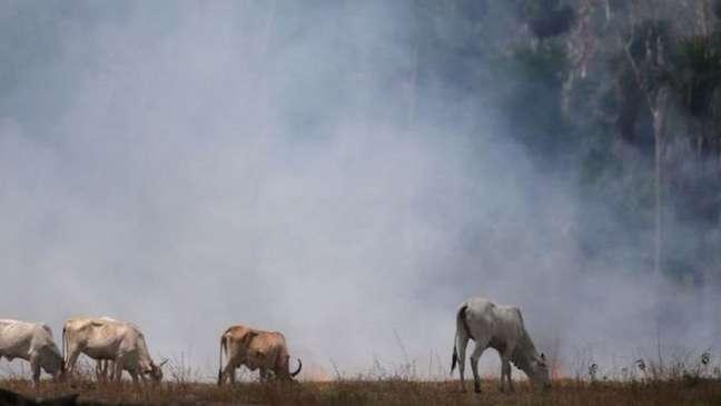Proteção ambiental é uma das principais bandeiras da atual geração de adolescentes. Postura do governo brasileiro em relação à Amazônia tem reduzido a popularidade do Brasil entre os jovens, diz Anholt