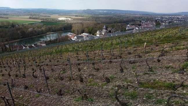 Vinícola em Champagne, na França 14/04/2021 REUTERS/Pascal Rossignol