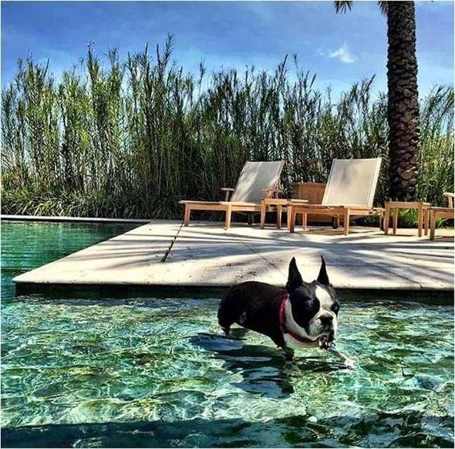 23. Espreguiçadeira de madeira e piscina com azulejo verde. Projeto de Daniel Nunes Paisagismo