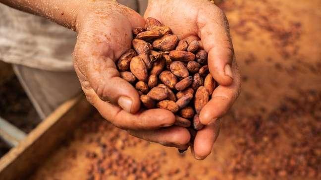 O chocolate que apreciamos hoje é um alimento muito mais processado e refinado do que aquele consumido pelos astecas séculos atrás