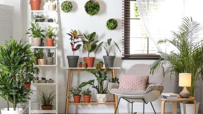 Plantas para você deixar a sua casa mais verde!