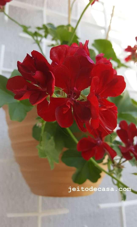 42; Vaso de gerânio vermelho pendente – Foto Pinterest