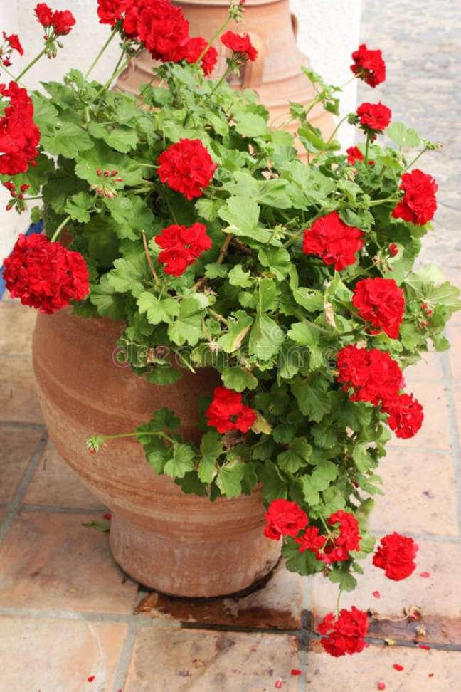 36. Quintal decorado com vasos de gerânio vermelho – Foto Dreamstime
