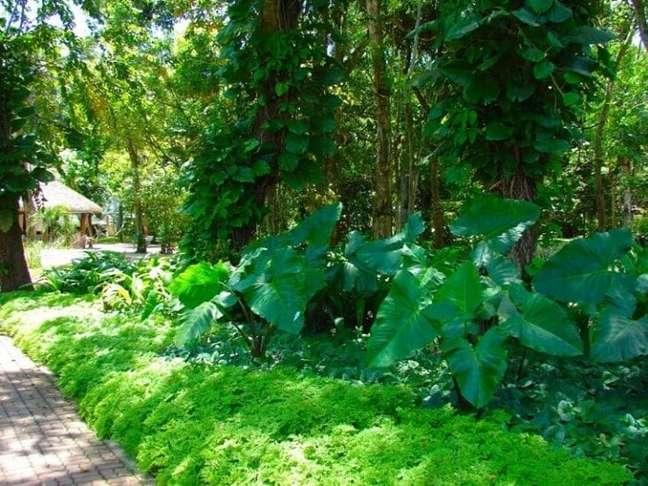 30. A folhagem da Pilea microphylla ajuda na forração do jardim. Fonte: Aparecida Franca Paisagista