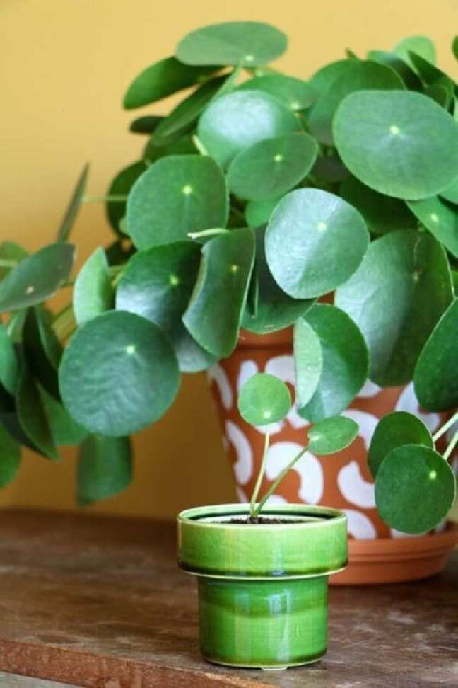 18. É difícil não se encantar coma folhagem da Pilea peperomioides. Fonte: Pinterest