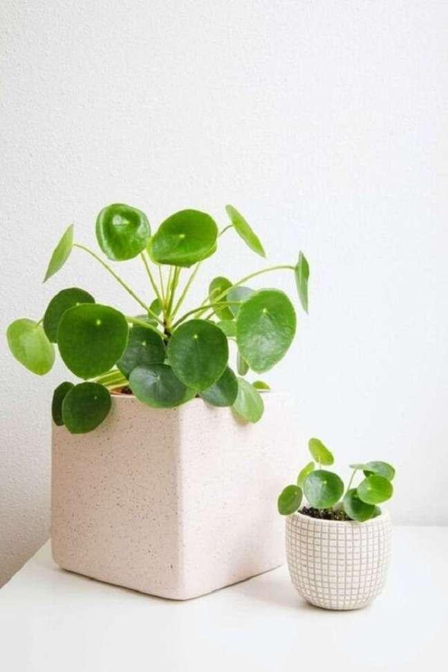 12. Utilize diferentes cachepôs para expor sua planta Pilea. Fonte: Pinterest