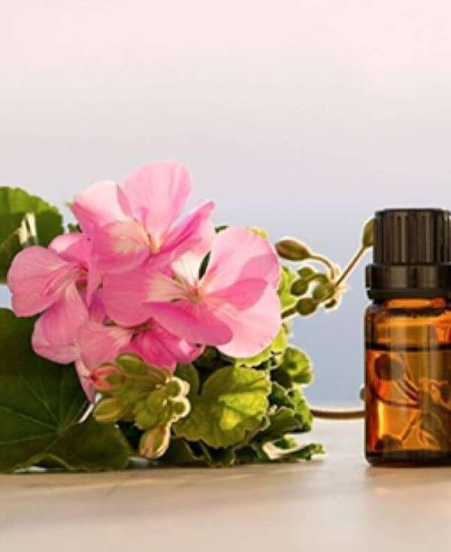 9. Gerânio é excelente para óleos essenciais e combate a ansiedade – Foto Oleos Essenciais