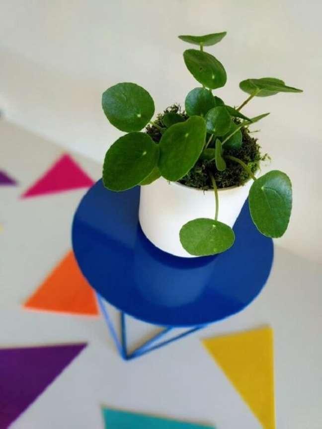 20. A Pilea peperomioides também é conhecida como planta chinesa do dinheiro. Fonte: Pinterest