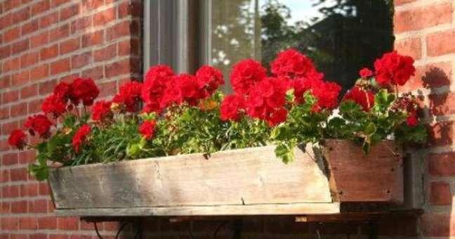 13. Floreira de madeira com gerânios vermelhos – Foto Mundo Ecologia