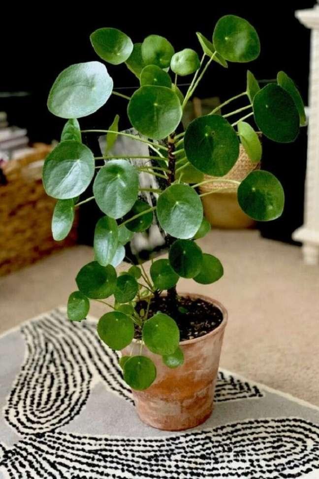 17. Decore seu ambiente com a planta Pilea peperomioides. Fonte: Pinterest
