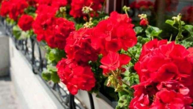 26. Jardim com floreira de gerânio vermelho – Foto GreenMe Brasil