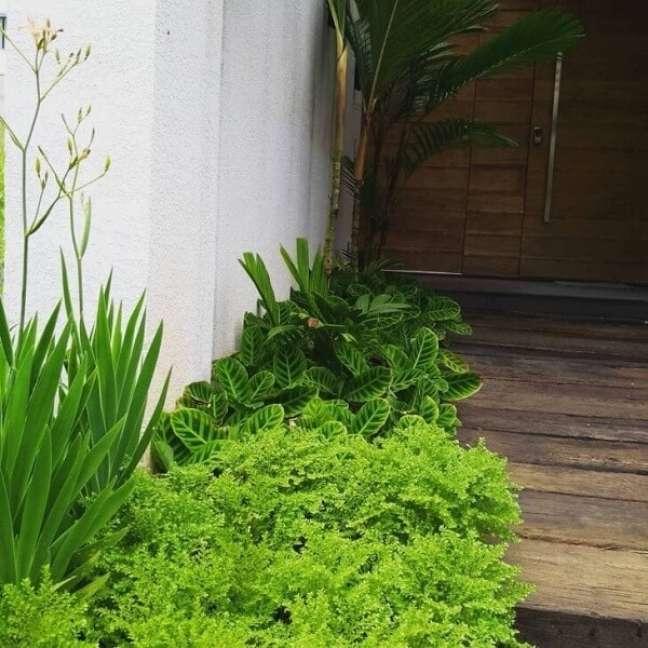 28. A Pilea microphylla traz beleza para a entrada da casa. Fonte: Mauricio Takahama