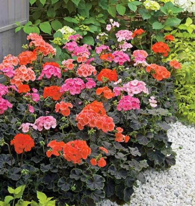 30. Jardim com gerânios vermelhos e rosas – Foto TH Jardins
