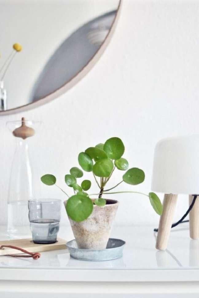 26. A Pilea peperomioides é ótima para ser cultivada dentro de casa. Fonte: Pinterest