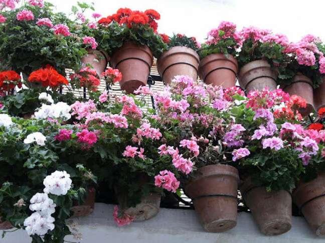 44. Vasos de gerânio na entrada de casa – Foto Planta Sonya