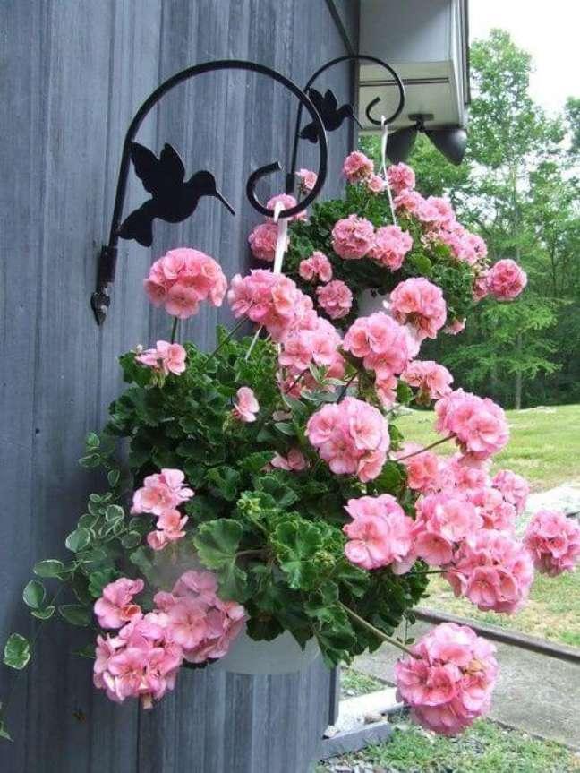 16. Gerânio pendente cor de rosa no jardim – Foto Deposito Santa Mariah