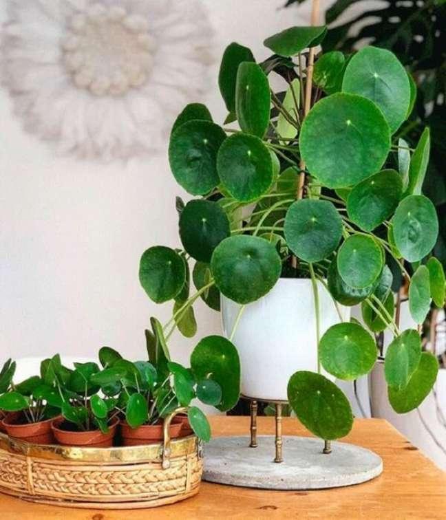 1. A Pilea é uma planta extremamente instagramável. Fonte: Pinterest