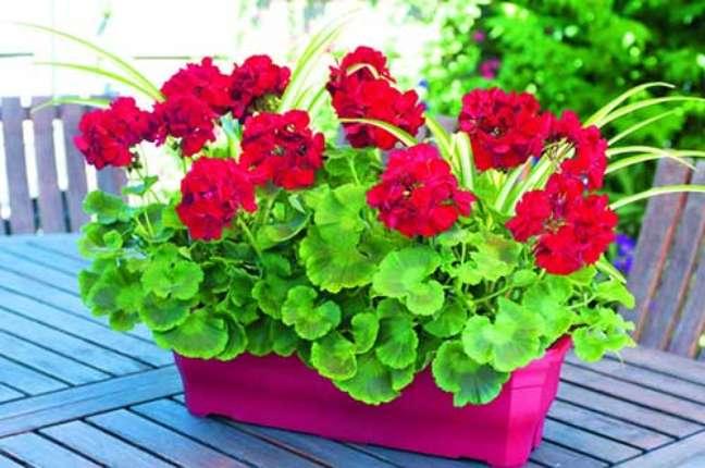 34. Mesa de jardim com gerânio vermelho – Foto I Love Flores