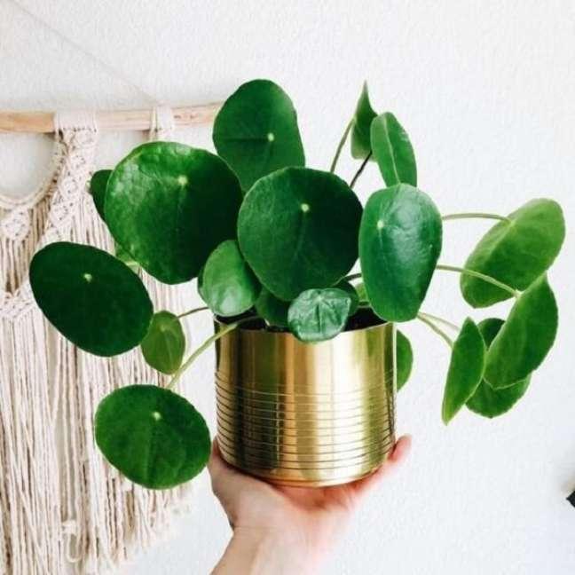 2. A Pilea é uma planta repleto de significados. Fonte: Gazeta do Povo