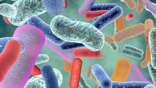 A microbiota intestinal é composta por milhares de espécies de microrganismos que vivem no nosso trato digestivo