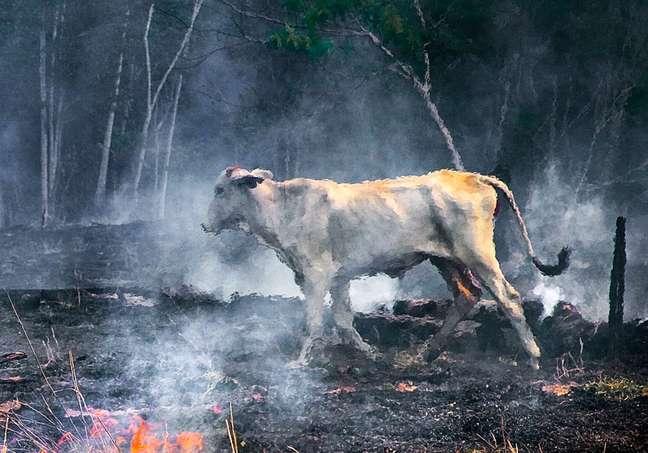 Fogo na Transamazônica. Janeiro de 2010