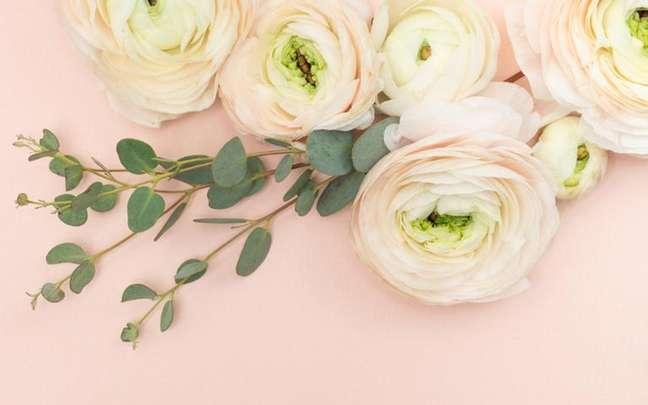 Dicas sobre o uso da rosa branca e seus benefícios no banho, no chá e em rituais -