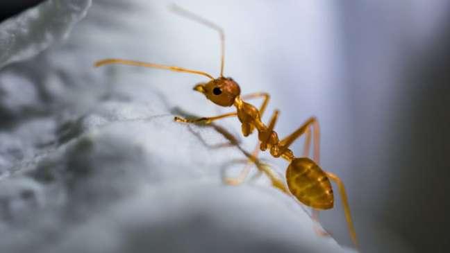 Formigas sabem quais grãos de terra remover na hora de cavar, para que seus túneis não desabem