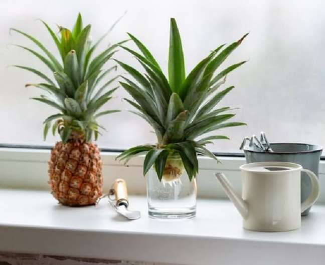 3. Como plantar muda de abacaxi. Foto: Gardening Know How